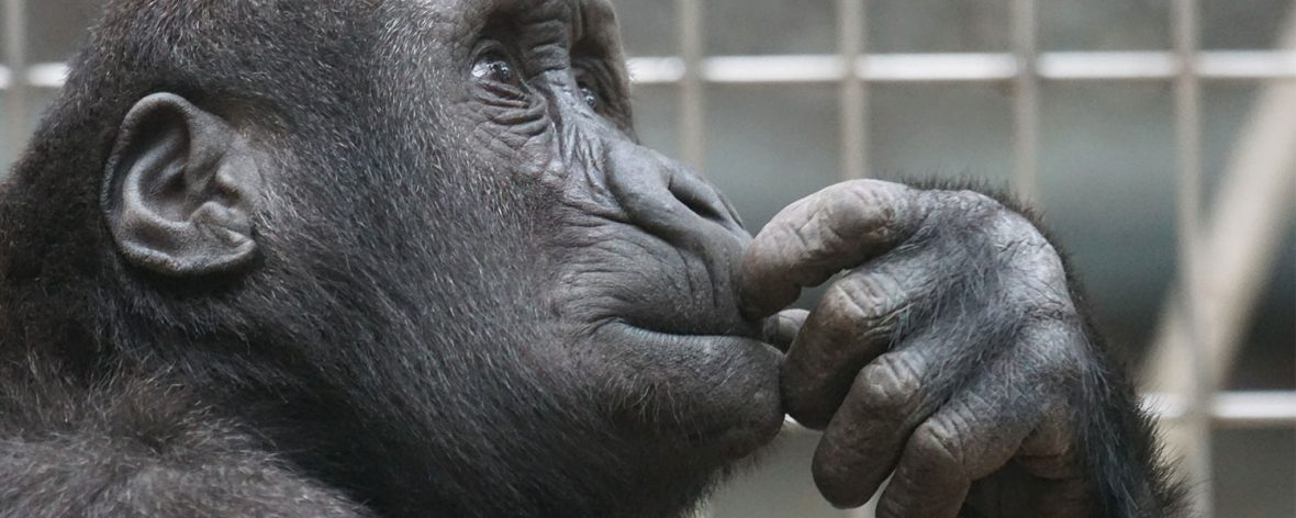 Facts About gorillas, Costs of a safari to Bwindi